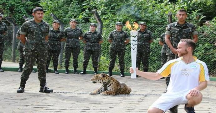 Sacrifício de onça exibida em passagem da tocha por Manaus revela drama de espécie ameaçada